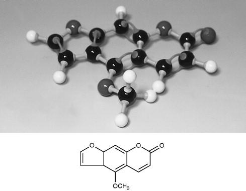 Lactones - an overview | ScienceDirect Topics