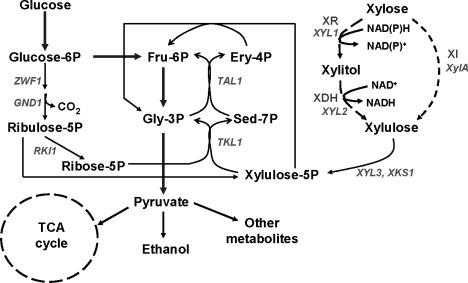 Ethanol Fermentation - an overview   ScienceDirect Topics