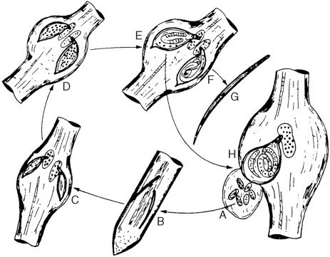 Well Labelled Diagram Of Root Knot Nematode 43 Wiring Diagram