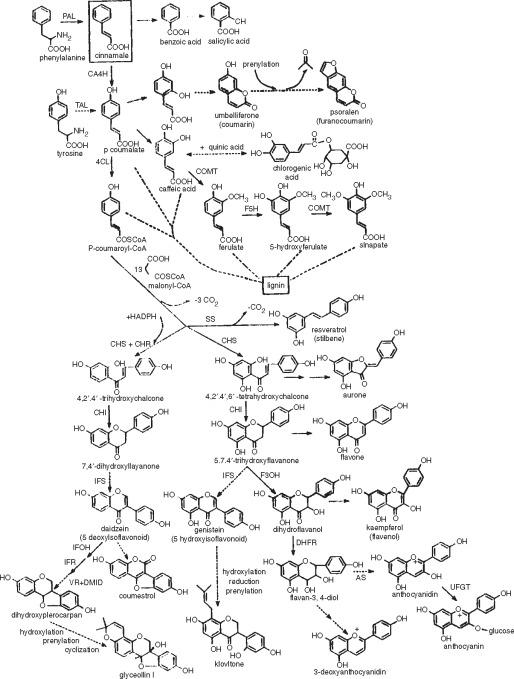 Phenylpropanoid