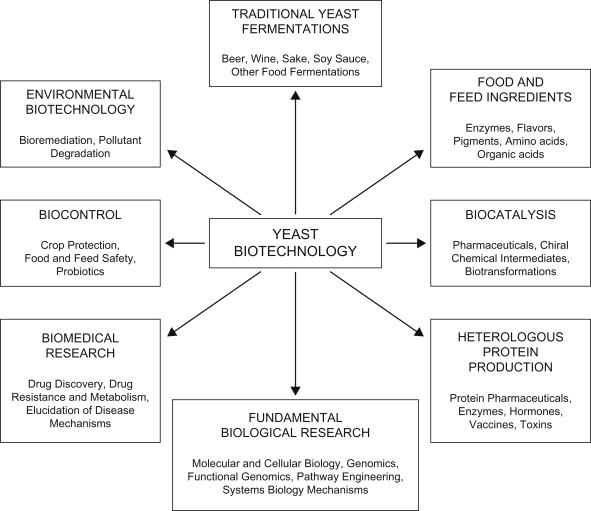 Yeast Biotechnology - ScienceDirect