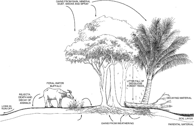 Forest Ecosystem An Overview Sciencedirect Topics