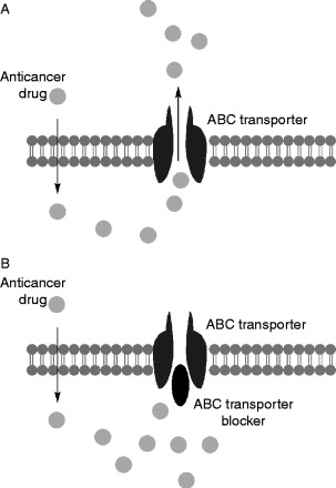 ABC Transporter - an overview | ScienceDirect Topics