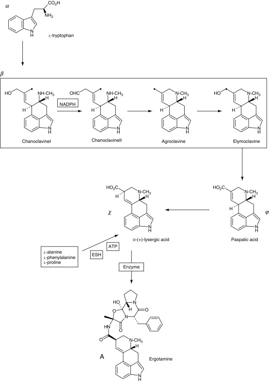 Psilocybin - an overview | ScienceDirect Topics