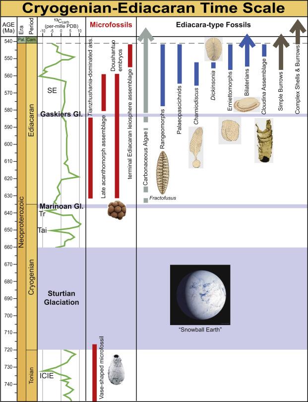 Ediacaran - An Overview | ScienceDirect Topics