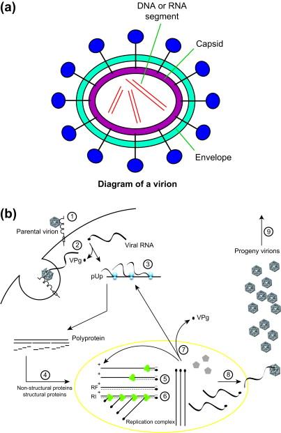 Overview Of Waterborne Pathogens Sciencedirect
