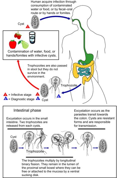 szemparaziták gyógyszerei