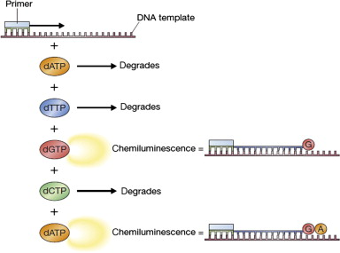 Pyrosequencing - an overview | ScienceDirect Topics