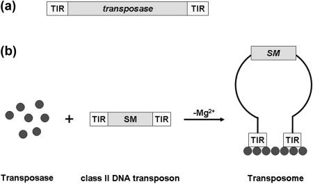 Ebook maloy microbial genetics