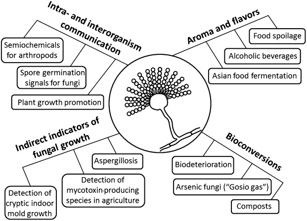 Fungal Volatile Organic Compounds Vocs And The Genus Aspergillus