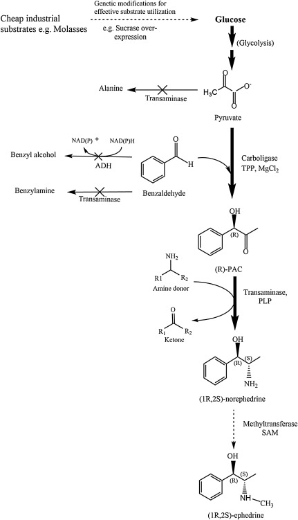 Metabolic Engineering of Saccharomyces cerevisiae for Synthesis of