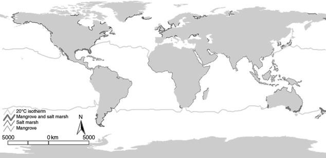 The Shifting Saltmarsh-Mangrove Ecotone in Australasia and