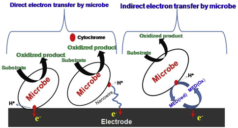 Constructed Wetland Coupled Microbial Fuel Cell Technology