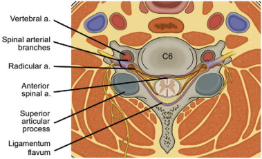 Cervical Nerve Root - an overview | ScienceDirect Topics