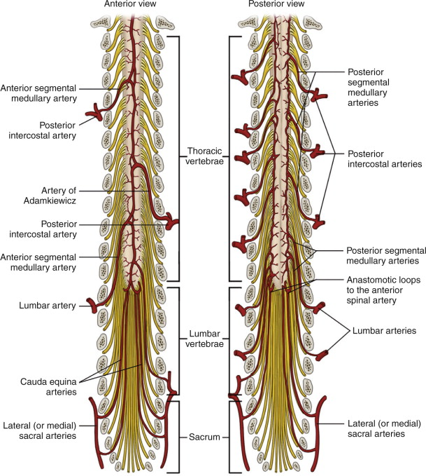 Intervertebral Foramina An Overview Sciencedirect Topics