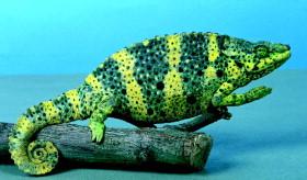 Lizard - an overview | ScienceDirect Topics
