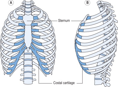 How many pairs of ribs articulate directly with the sternum