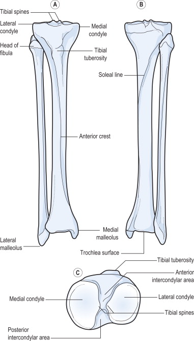 lower leg an overview sciencedirect topics