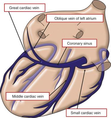 Great Cardiac Vein An Overview Sciencedirect Topics
