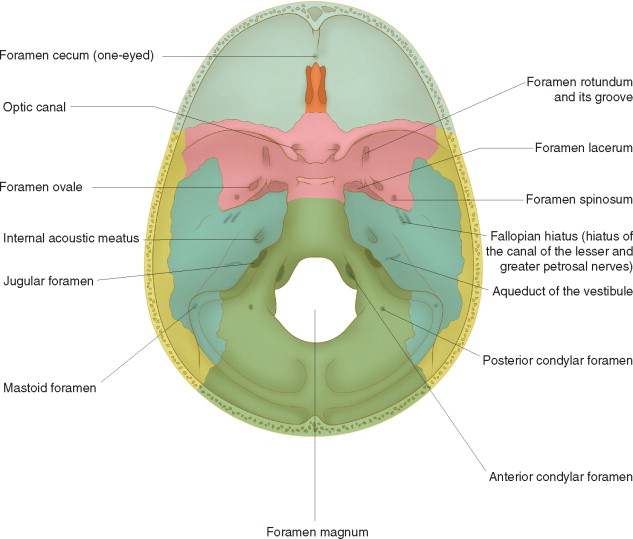 Interpeduncular Cistern An Overview Sciencedirect Topics