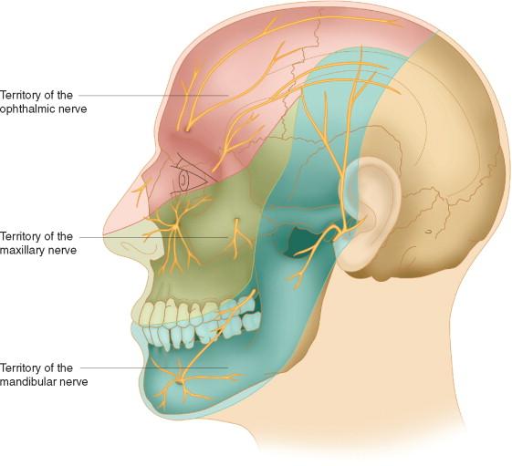 Trigeminal nerve facial nerve