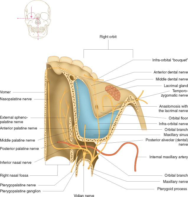 Maxillary Nerve An Overview Sciencedirect Topics