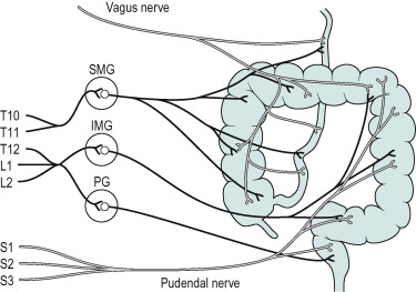 Ascending Colon - an overview | ScienceDirect Topics