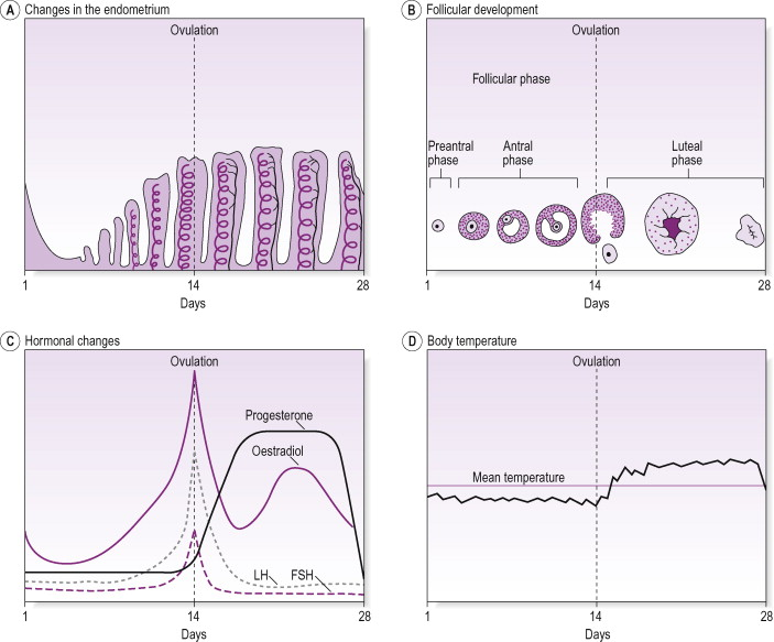 Progesterone - an overview | ScienceDirect Topics