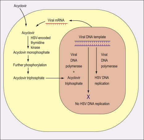 Valaciclovir - an overview | ScienceDirect Topics