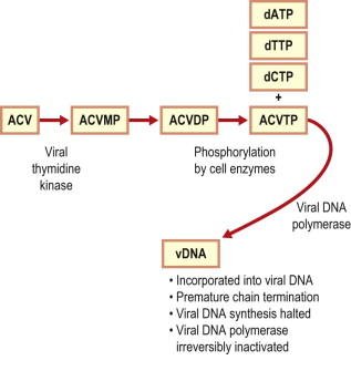 Aciclovir Triphosphate - an overview | ScienceDirect Topics