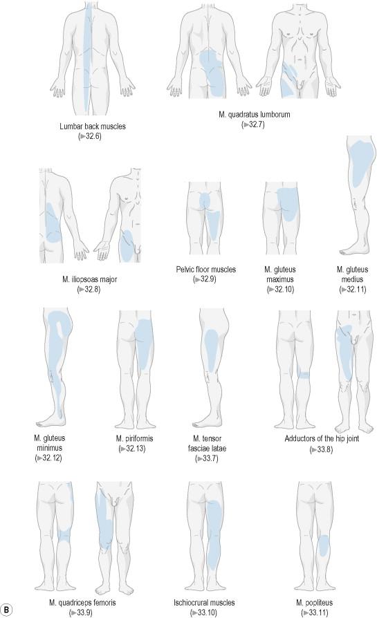 Vastus Muscle An Overview Sciencedirect Topics