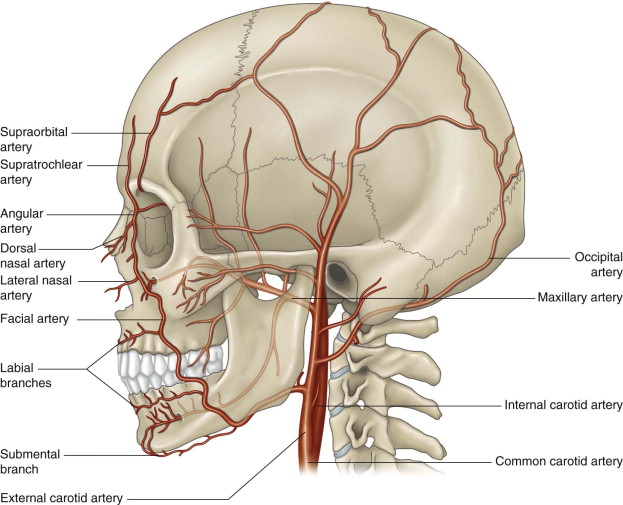 Facial anatomy diagram where