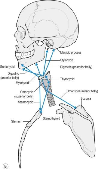 Poor Posture - an overview | ScienceDirect Topics