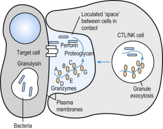 where fertilization usually occurs here