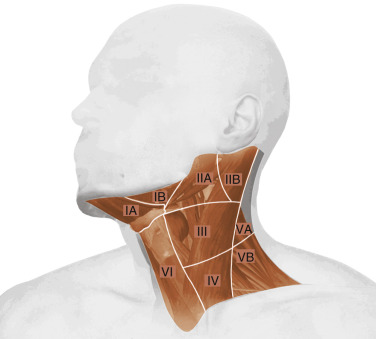 Neck Dissection - Clinical Appln., Recent Advs.