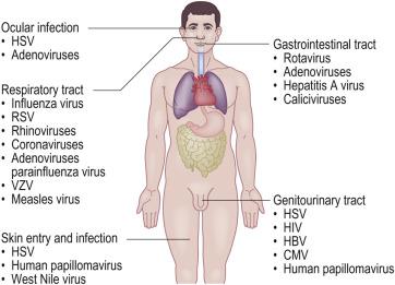 human papilloma virus portal of entry papiloma escamoso benigno