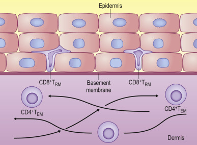 Immunological Memory - an overview | ScienceDirect Topics