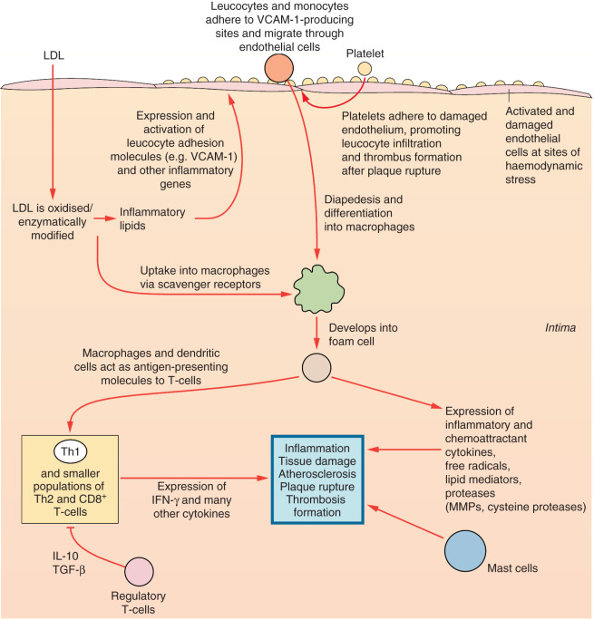 Ischemic Heart Disease An Overview ScienceDirect Topics