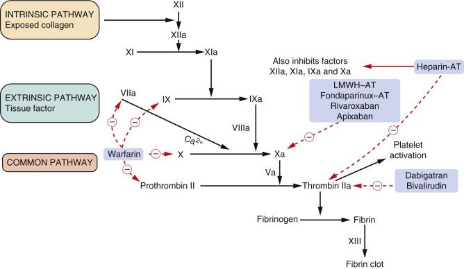 factors involved in blood coagulation