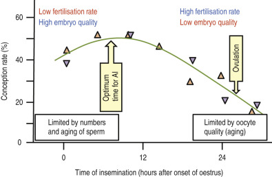 stress in dairy animals—heat stress: effects on reproduction☆