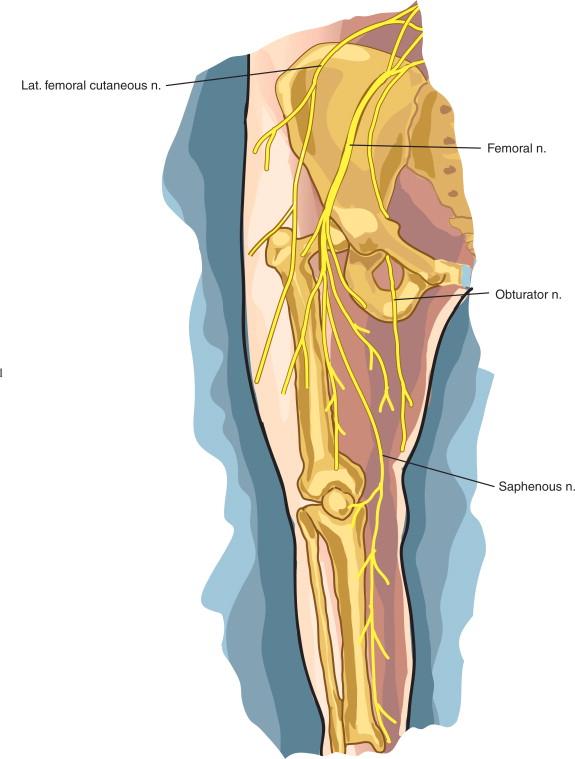 Meralgia Paraesthetica An Overview Sciencedirect Topics