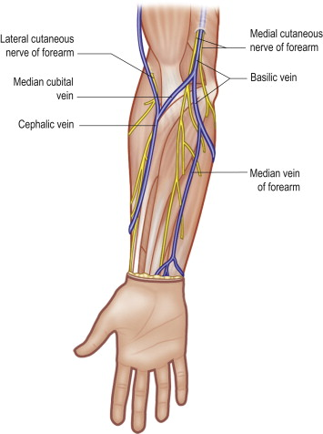 Median Cubital Vein - an overview | ScienceDirect Topics