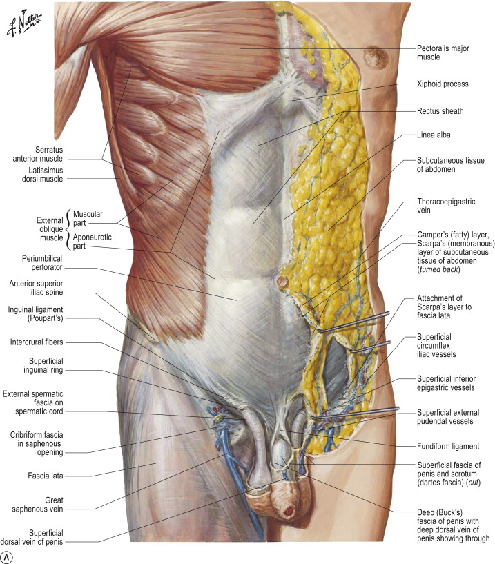 Vascular Anatomy An Overview Sciencedirect Topics