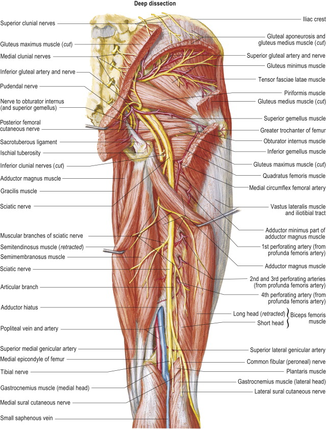 Internal Iliac Artery An Overview Sciencedirect Topics