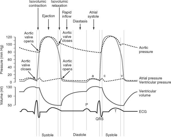 Cardiac Cycle An Overview Sciencedirect Topics