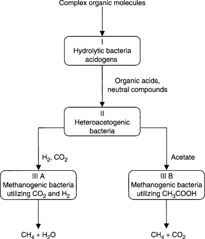 Anaerobic Process - an overview   ScienceDirect Topics