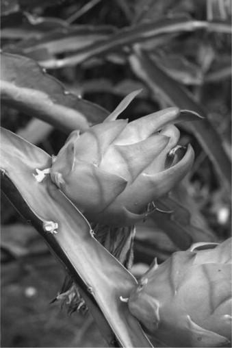Cactus - an overview | ScienceDirect Topics