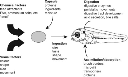 Microdiets as alternatives to live feeds for fish larvae in