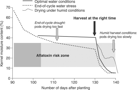 mycotoxin contamination of nuts sciencedirect