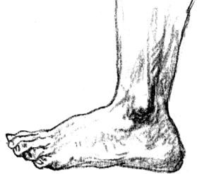 Foot Sketch Templates And Footwear Design Sciencedirect